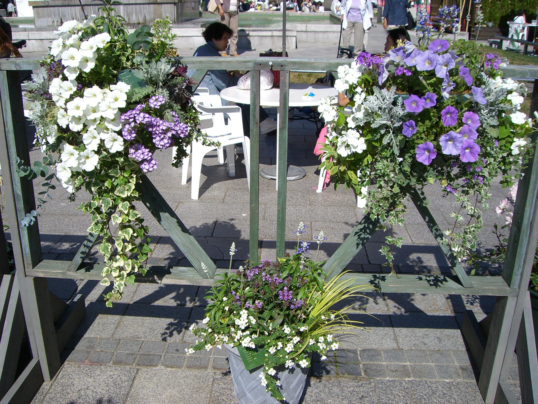 ペチュニア系のお花とアイビー等観葉植物のハンギングバスケット