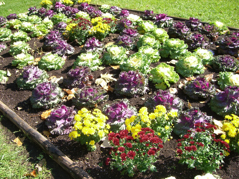札幌大通り公園秋の花壇