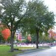 札幌大通り公園の紅葉