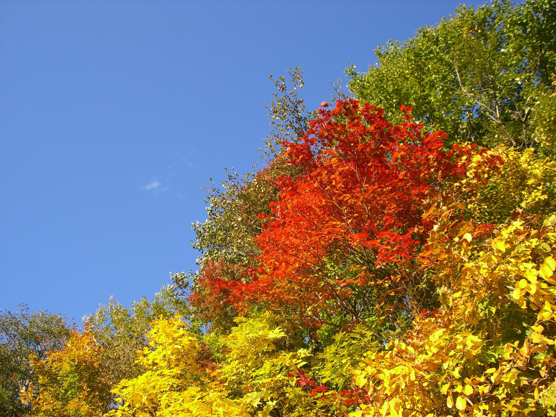 秋の豊平峡(もみじ)