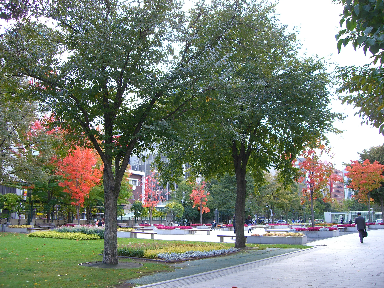 地域・旅行: 札幌大通り公園の紅葉
